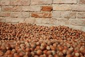 image of ground nut  - hazelnuts background composed by many nuts laying on the ground