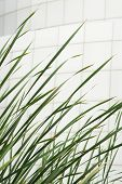 Vertical Green Cattail And White Tiles Building Wall