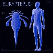 Eurypterus And Human Size Comparison