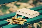 Closed book lying near autumn leaves on bench in park