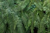 Green Branches Of Fern