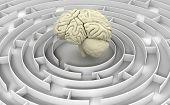 Maze to human brain