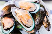 Marine Mussels In The Shell