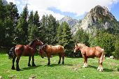 Picturesque Nature Landscape With Horses.