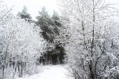 Fantastic Christmas Mysterious Road Through Frozen Winter Snowy Forest, Russia