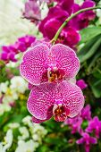 Purple and white orchid