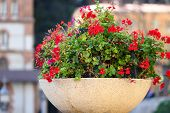Beautiful Red Flowers