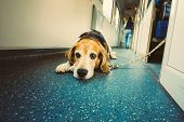 Transportation Dog In Railway Carriage