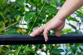 Hand Of Man With Diamond Expensive Ring With Plants As Background