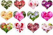 Set of hearts from various decorative flowers