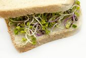 Bread With Radish Sprouts