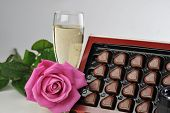 Champagne  And Pink Rose