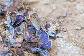 picture of excrement  - Close up photo of destroyed butterfly family - JPG