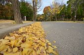 Tourist Visits Autumn Leave In Osaka Castle Park In Osaka City, Japan