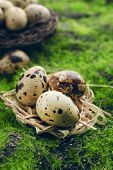 pic of grass bird  - Bird eggs in nest on green grass background - JPG