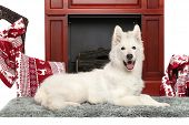 picture of shepherds  - Happy White Swiss shepherd dog near the fireplace - JPG
