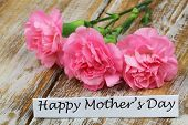 foto of carnations  - Happy Mother - JPG