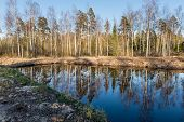 pic of scum  - reflections of trees in blue pond water - JPG