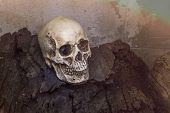 picture of condolence  - Human skull on old log with warm tone  - JPG