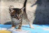 image of homeless  - Small striped homeless kitten grey at the animal shelter  - JPG