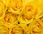 image of rose close up  - close up of yellow roses on the market - JPG