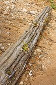 Driftwood On A Rocky Shore