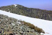 Mountain Tundra