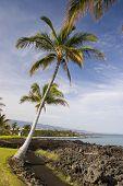 Hawaiian Palmen und Strand