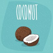 Isolated Ripe Coconut Fruits Whole And Piece poster