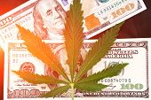 Sheet Of Marijuana In The Sunlight . Money With Marijuana Leaves Close. Hemp With Money. Marijuana L poster