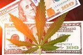 Sheet Of Marijuana In The Sunlight . Money With Marijuana Leaves Close. Hemp With Money. Marijuana L poster
