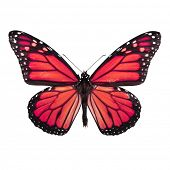 Bright Red Butterfly Isolated on White Background