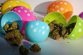 Marijuana Easter. Marijuana Buds in colored plastic Easter Eggs. Easter Holiday with Marijuana. Room poster