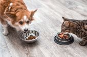 Pet Eating Foot. Dog And Cat Eats Food From Bowl poster