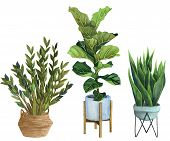 Indoor Plants In A Pot . Watercolor Set. Home Plants Potted. Hand Drawn Illustration. Zz Plant (zami poster