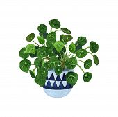 Indoor Plant Watercolor Illustration. Home Plants, Chinese Money Plants Or  Missionary Plants In A C poster