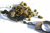 Marijuana Laws. Marijuana Buds with Police Hand Cuffs. Isolated on white. Room for text. Cannabis an poster
