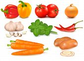 The big colorful group of vegetables. Photo-realistic vector