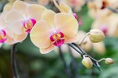 Phalaenopsis Orchid Flower In Garden At Sunny Summer Or Spring Day. Flower For Postcard Beauty Decor poster