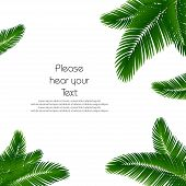 Palm Leaf Background. Palms Leaves For Print. Template Palm Leaves For Cover Book. Realistic Palms L poster