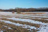 Melting Snow On The Field. Forest And Blue Sky poster