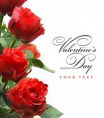 Art Greeting Card With Red Roses  Isolated On White Background