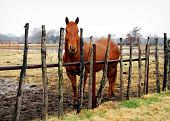 Horse standing behind an old country fence