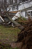 ANDOVER, NJ - OCT 30: An uprooted tree laying across the front porch of a home after Hurricane Sandy