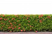 Shrub Fence Isolated On White Background