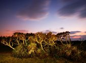 Tropical Plants at dusk in Manzamo, Okinawa