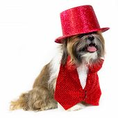 Dog In A Red Party Costume