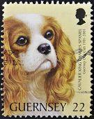 GUERNSEY - CIRCA 2001: A stamp printed in Guernsey shows a dogcavalier king charles spaniel circa 20