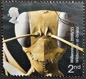 Reino Unido - alrededor del año 2000: Un sello impreso en Gran Bretaña muestra cabeza de Gigantios descructor (An