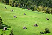 Verdes pastos - Sesto - Italia